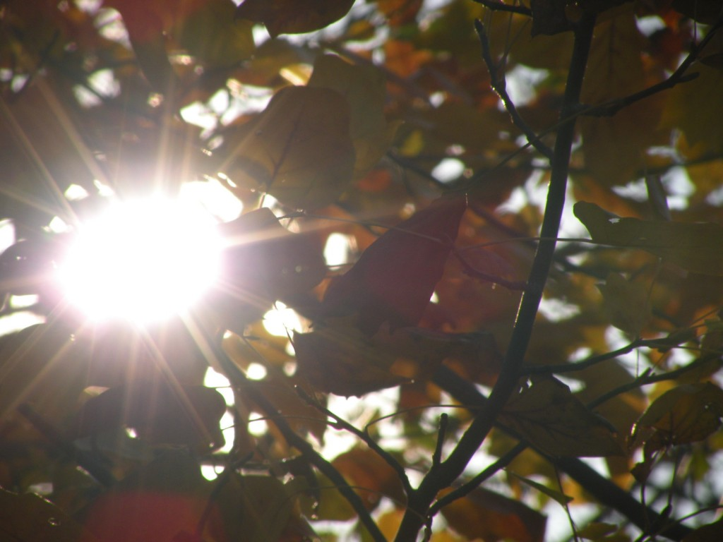 Shot taken through the magnolia tree in front of the house after finishing up some fall yard work.